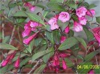 Les arbres fleurs et plantes d 39 ombre - Fleurs qui poussent a l ombre ...