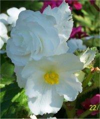 Liste De Plantes A Fleurs Blanches