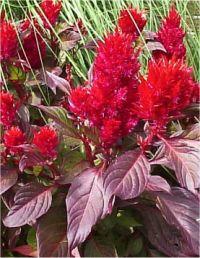 Plante A Fleur Rouge Plante A Fleur Jaune Gite Pompadour Lubersac