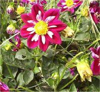 Nom Des Fleurs Avec Photos Journalphoto