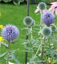 Les Plantes A Fleurs Sechees